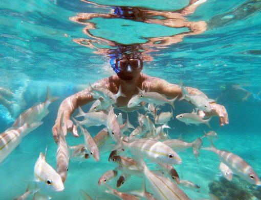 corais-de-maracajau_1500px